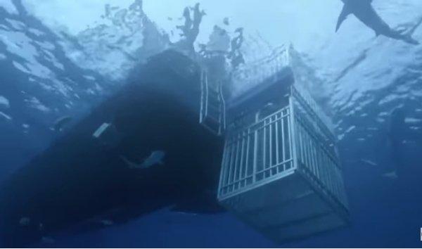 Баскетболист Шакил О'Нил столкнулся с акулой в закрытой клетке под водой